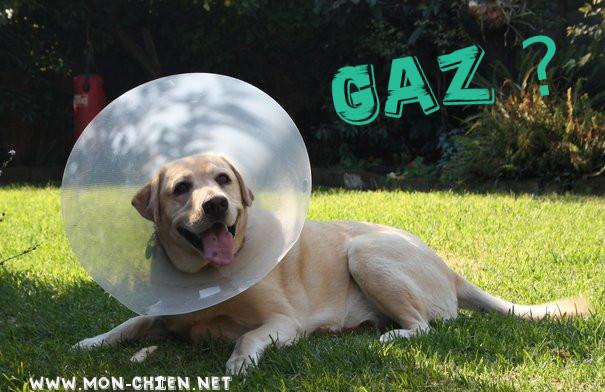 chien avec des gaz
