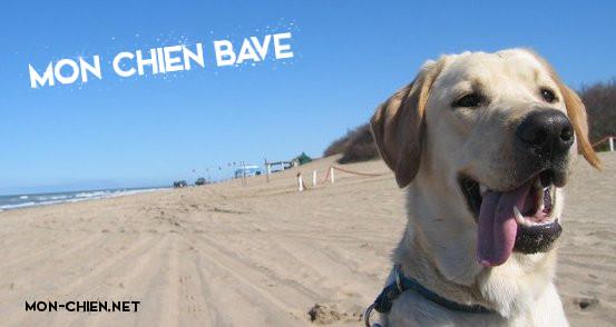 chien et bave