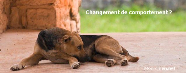 changement comportement chien