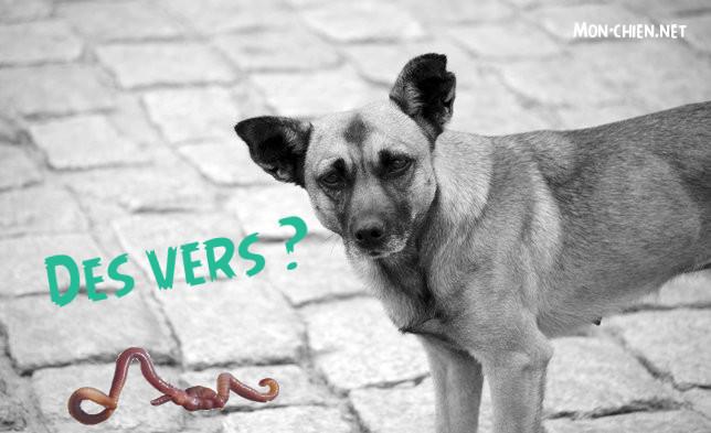 chien et vers
