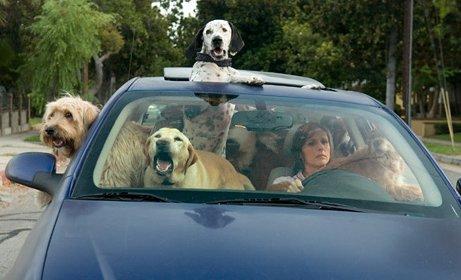 chiens en voiture