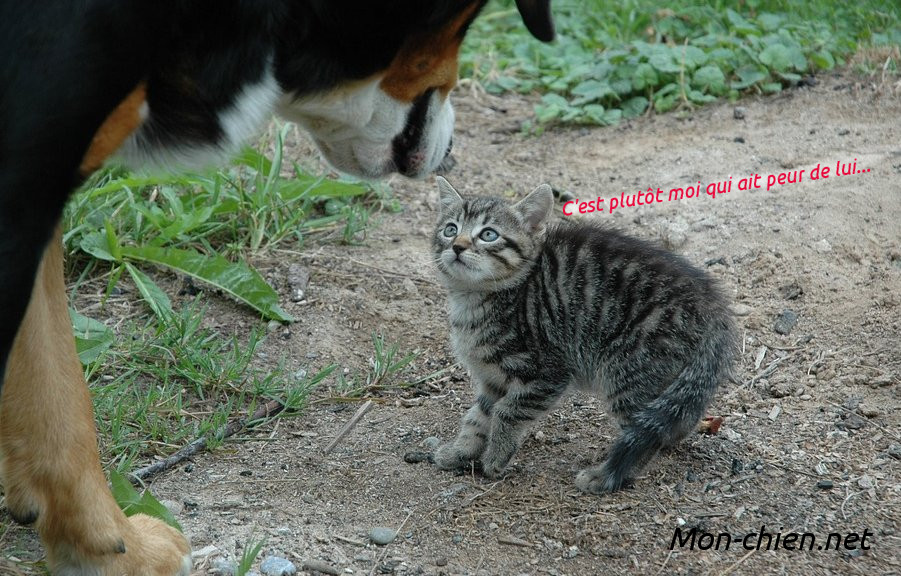 Chien chat et peur