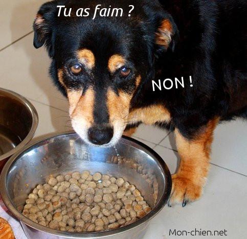 chien qui n'a pas faim