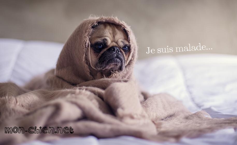 """Résultat de recherche d'images pour """"chien malade"""""""