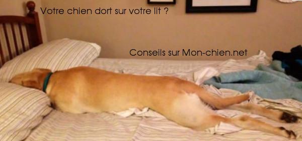 chien dort sur lit
