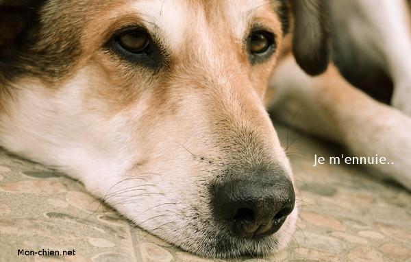 chien et ennuie