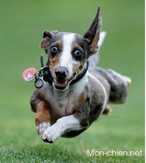 chien content pipi