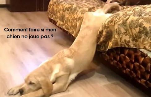 chien pas joueur