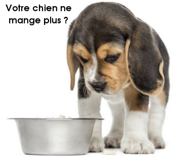 chien refuse de manger