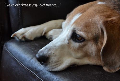 chien dépressif