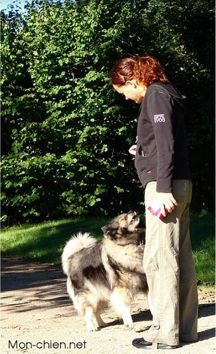 L'éducation de votre chien