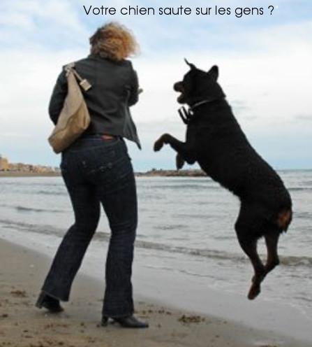chien sauteur