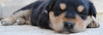rêves d'un chien